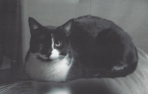 Tributes   Peaceful Pet Passage   Mechanicsburg, PA