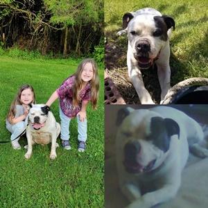 Tributes | Peaceful Pet Passage | Mechanicsburg, PA