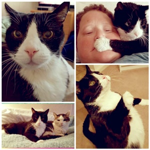 I Met Sam A Domestic Tuxedo Male Cat In The Late 1990s Who Was Abandoned By Former Apartment Attendant He Managed To Crawl Through Floor Boards My