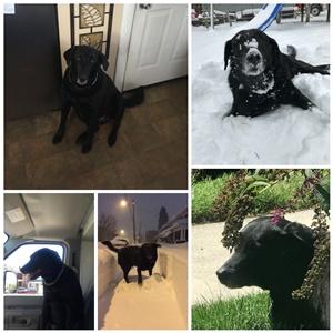 Car Dog Guards & Nets MINI COOPER S 02-06 FRONT SEAT DOG PET GUARD ...