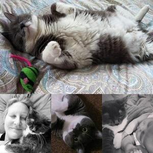 444e4b6e83b4 Tributes | Peaceful Pet Passage | Mechanicsburg, PA