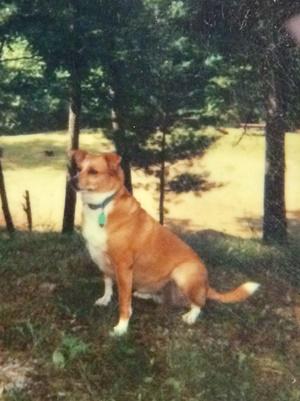 Tributes Peaceful Pet Passage Mechanicsburg Pa